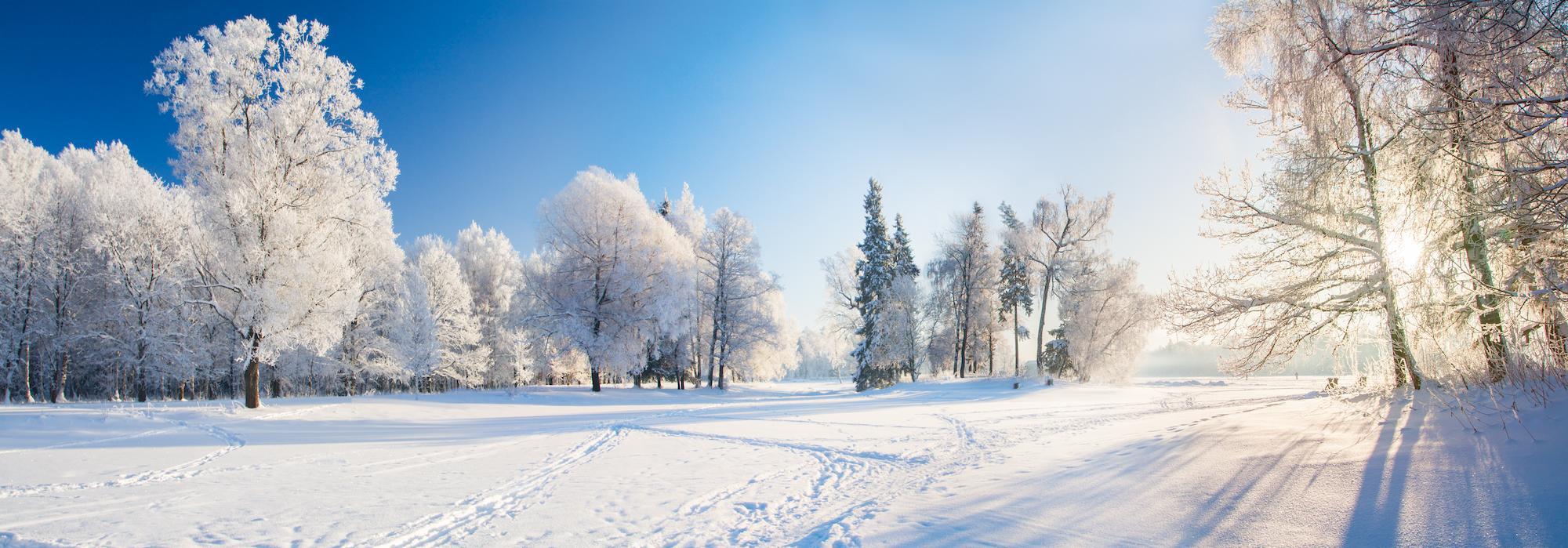 snowy field and trees